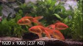 Plasma Art - Classic Aquariums (2011) Blu-ray MPEG-4 AVC DTS-HD HA 5.1