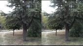 Прогулка по ботаническому саду ТНУ в 3D (часть 2) Горизонтальная анаморфная