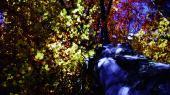 Для чувств 2. Увлекательное путешествие в мир природы и звука (2011) BDRip