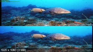 Тайны подводного мира / Deep Sea Вертикальная анаморфная