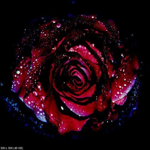http://i32.fastpic.ru/thumb/2011/1109/2b/cace3bff4f33801d50b69a37412c2a2b.jpeg