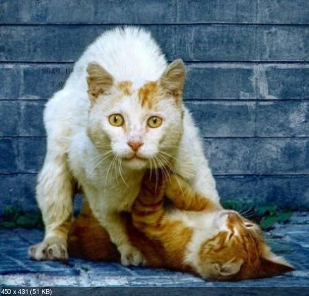 Мега приколы про котов (2011/85 шт)