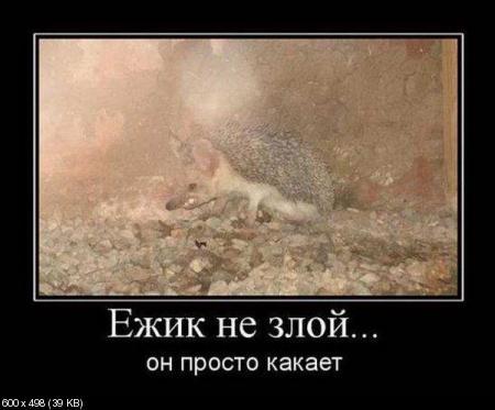 Свежая сборка демотиваторов от 02.12.2011