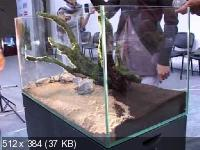 Мастер-класс Такаси Амано по оформлению Природного аквариума (2011) DVDRip