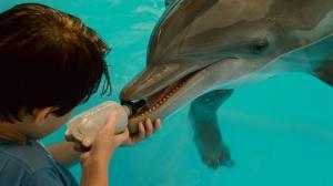 История дельфина / Dolphin Tale (2011) BDRemux