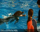 История дельфина / Dolphin Tale (2011) DVDRip
