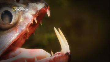 На крючке: Рыбы монстры. Рыба-вампир / Hooked: Monster Fish. Vampire Fish (2009) HDTV 1080i