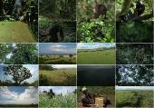 BBC: Шимпанзе - есть ли выход? / BBC: Chimps of the Lost Gorge (2011) HDTVRip 720p