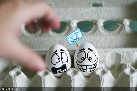 Одушевленные яйца (500x326-500x635)