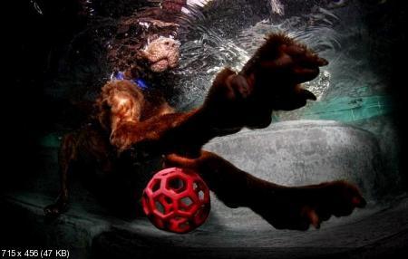 Подводная съемка ныряющих собак (2012)